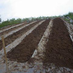 何とか5本の畑を耕しました