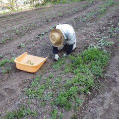 一日除草作業に追われています