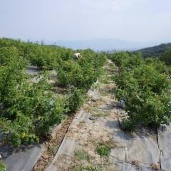 梅雨の時期は雑草の勢いも旺盛です