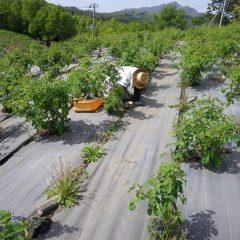 夏のような日差しの中で除草作業は今日も続いています