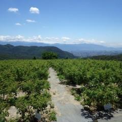 農場から甲府の街並みがハッキリと望めますが残念ながら富士山は雲の中