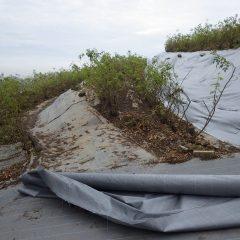 防草シート張り替え作業