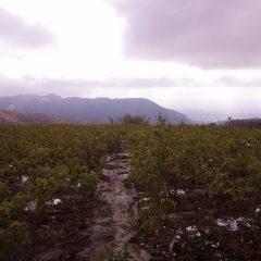 今朝もまだ雪雲の様な重たい雲が農場を覆っています