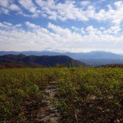 雲の多い農場ですが富士山が綺麗に見えました