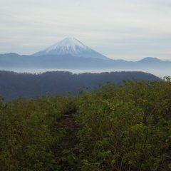今日は昼過ぎに富士山がローズ畑に現れました