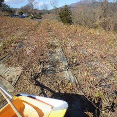 除草した草と切った枝の後片付けも大詰めです