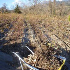 一通路で一輪車2~3台分の雑草と切り枝を運び出します