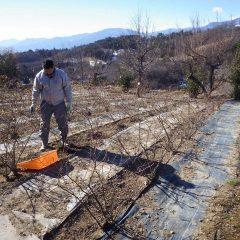雪の残った山から吹き下ろされる風は一段と寒く厳しい作業が続きます