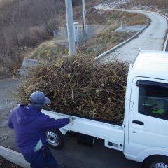 切り取った枝を片付けて本日の作業終了