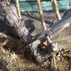 古く木質化した枝を切り取ります
