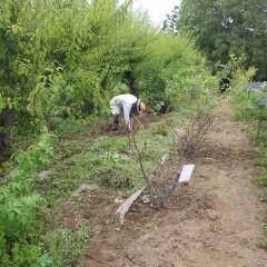 秋の気配を感じつつ汗だくになっての除草作業には変わりありません