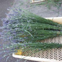 乾燥しやすいように小分けに束ねられたラベンダー