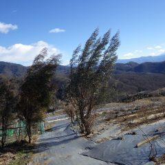 今日も農場には寒風が吹き荒れています