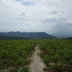 台風12号の影響なのか雲の多い農場です  吹く風が心なしか涼しく感じます