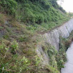 一番やっかいな葛は一日に30cm伸びると言われ、農道にまで伸びて来ます