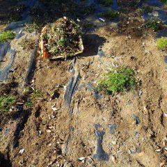 雑草に覆われてしまったので除草作業をしました