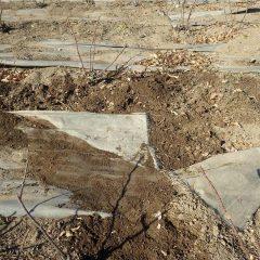 掘り返された土を元に戻し根をしっかり埋め直しました