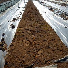 畑の石や雑草を取り除き整地して定植する準備をしました