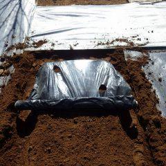 土でマルチをしっかり押さえて張って行きます