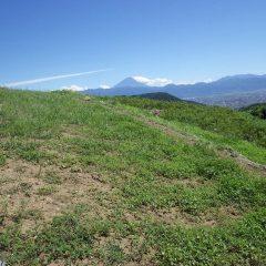 ほんの一ヶ月前に除草作業をしたばかりなのに畑は雑草で覆われています