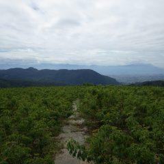 台風接近の影響か曇り空で気温は高くないものの湿度が高く非常に蒸し暑いローズ畑