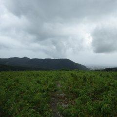 台風の影響で雨が降ったり止んだりを繰り返しているローズ畑