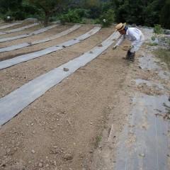 整地した畑に種を混ぜた培養土を蒔きます