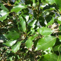 中の葉はみずみずしい緑色です