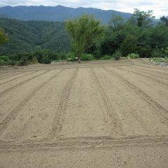 ロータリー耕耘の終わったカモマイル・ジャーマン畑
