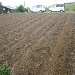 雨で土が流れ出さないよう急いで畝間の溝を切りました