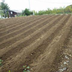 雨が降り出す前に畝立て作業が終わり種蒔き準備完了
