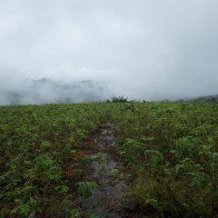 朝から雨が降ったり止んだりのローズ畑