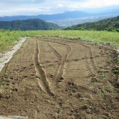 午後になり畑も乾いて来たので最後に残ったカモマイル・ジャーマン畑に種を蒔きます