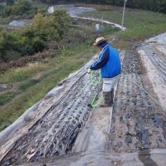 植え終わったら活着を促す為にタップリと灌水をします