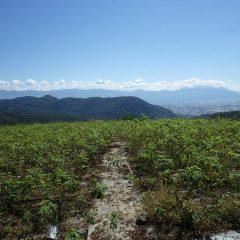 朝から秋晴れが広がるローズ畑  残念ながら富士山は雲の中