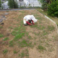日々除草作業をしています