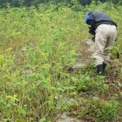 炎天下の除草も大変ですが雨の中での除草も大変です