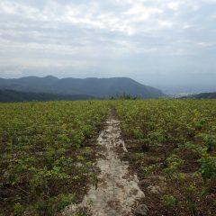 朝まで降っていた雨が上がり何とか晴れたものの雲の多いローズ畑
