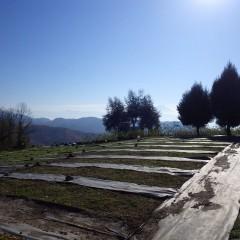 朝から晴れ渡った農場は身が引き締まる寒さです