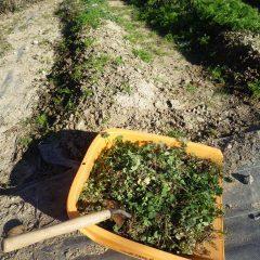 除草作業で一日が終わりました