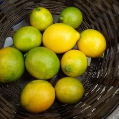 黄色く色付き始めたたレモン
