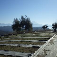 今年最初の農場での作業を富士山が出迎えてくれました