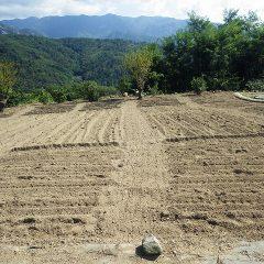 耕運作業が終わったカモマイル・ジャーマン畑