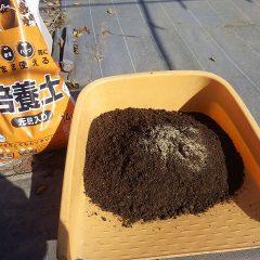 種が非常に小さいので培養土に混ぜてから畑に蒔きます
