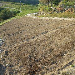 全ての畑に種を蒔き終わりました