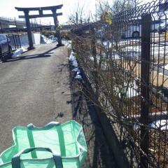 農場に行く道はまだ雪が残っていて登れない為、事務局前のつるバラの剪定を行いました