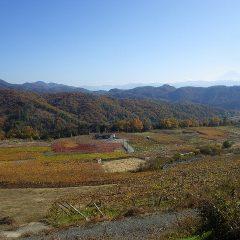 農場の周りの山々や葡萄畑も紅葉が始まっています