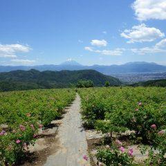 未明に雷雨のあった農場には澄みきった青空と富士山の姿がありました