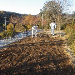硬くなった土を耕しています