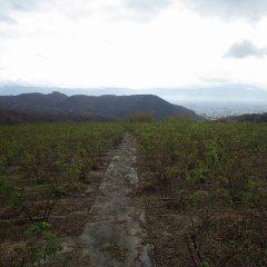 天気予報よりも早く朝から小雨が降るローズ畑